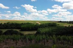 Panorama Vigne