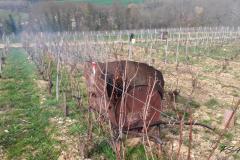 Bruleau dans les vignes